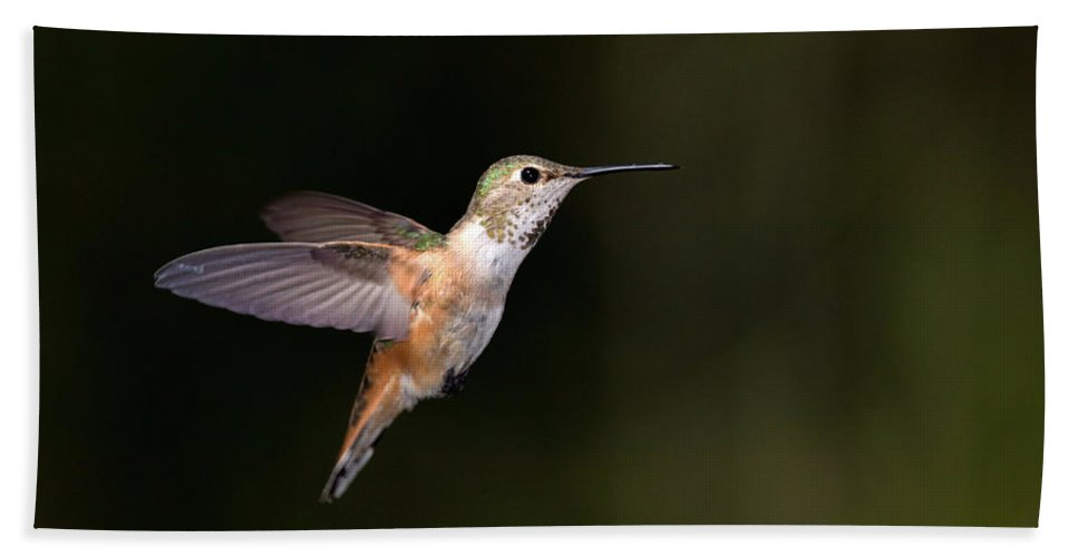 Rufous Beach Towel featuring the photograph Rufous Hummingbird by Randall Ingalls