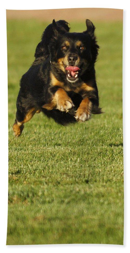 Pet Beach Towel featuring the photograph Run Dog Run by Jill Reger