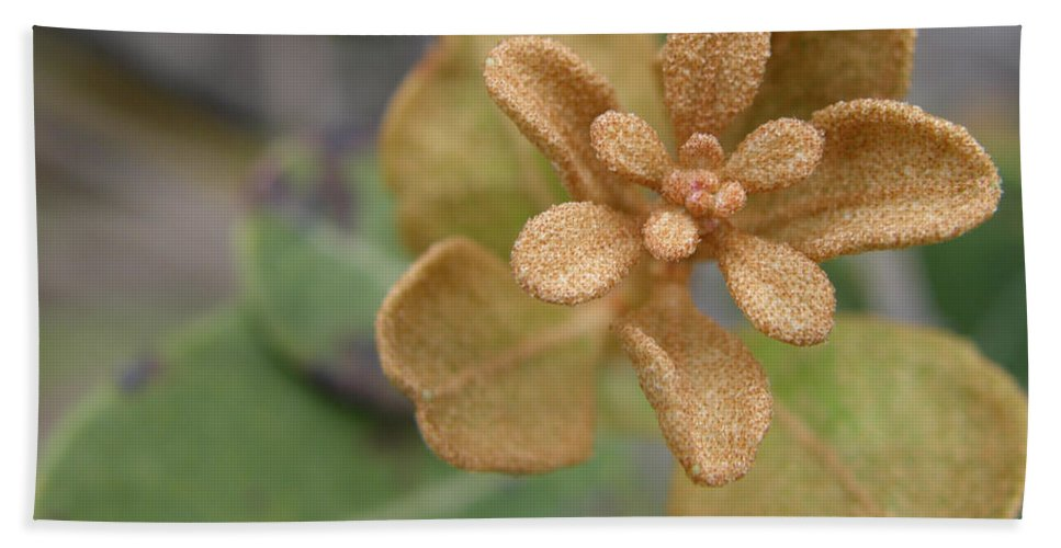 Plant Beach Towel featuring the photograph Rusty Lyonia by Kimberly Mohlenhoff