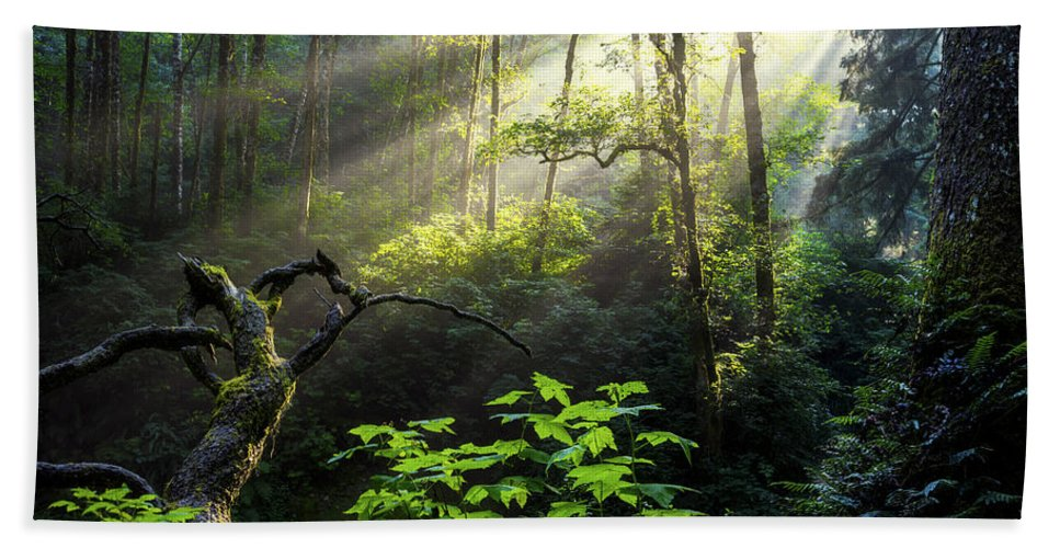 Light Beach Towel featuring the photograph Sacred Light by Chad Dutson