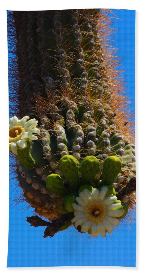 Saguaro Beach Towel featuring the photograph Saguaro Elephant Trunk by James BO Insogna