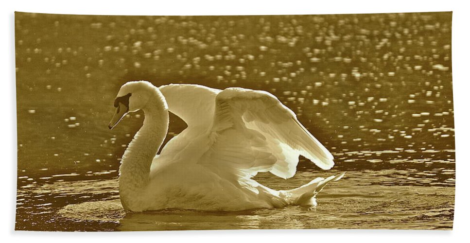 Swan Beach Towel featuring the photograph Sam by Diana Hatcher