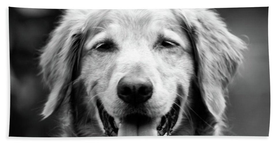 Dog Beach Towel featuring the photograph Sam Smiling by Julie Niemela