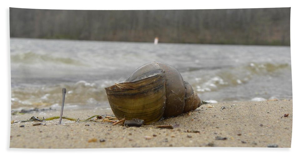 Nature Beach Towel featuring the photograph Sand And Shell by Kimberly Owens