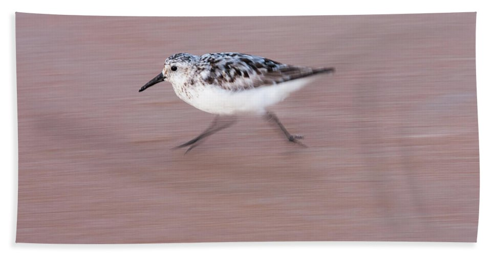 Sanderling Beach Towel featuring the photograph Sanderling On The Run by Paul Rebmann