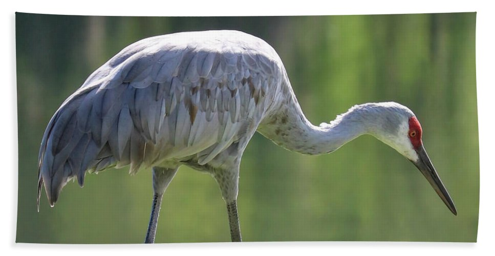 Bird Beach Towel featuring the photograph Sandhill And Green Pond by Carol Groenen