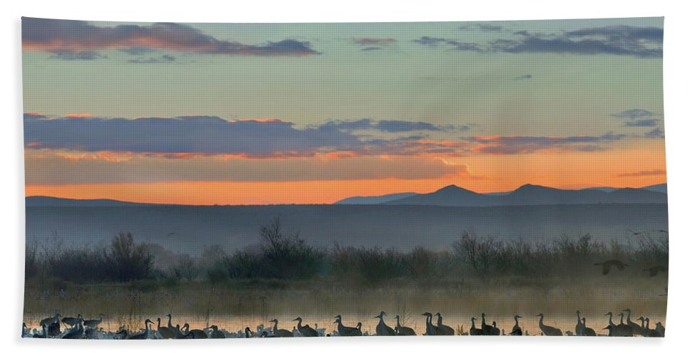 Wildlife Beach Towel featuring the photograph Sandhill Cranes And Snow Geese by Tim Fitzharris