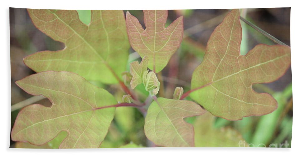 Nature Beach Towel featuring the photograph Sassafras by Brook Steed