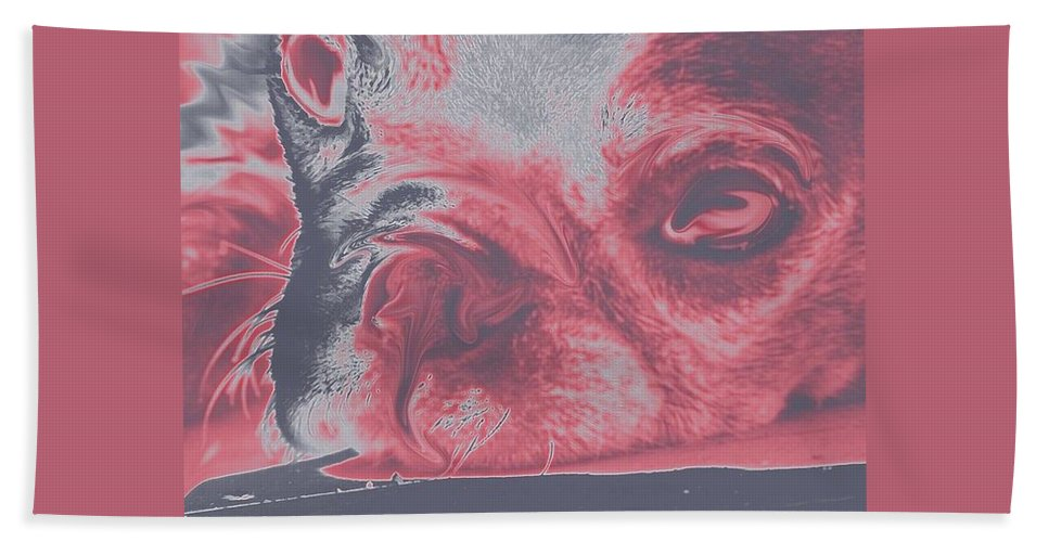 Dog Beach Towel featuring the photograph Sassy Red Dog by Amber Stubbs
