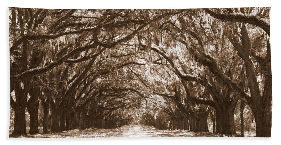 Savannah Beach Towel featuring the photograph Savannah Sepia - Glorious Oaks by Carol Groenen