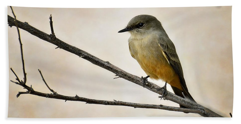 Say's Phoebe Beach Towel featuring the photograph Say's Phoebe by Saija Lehtonen