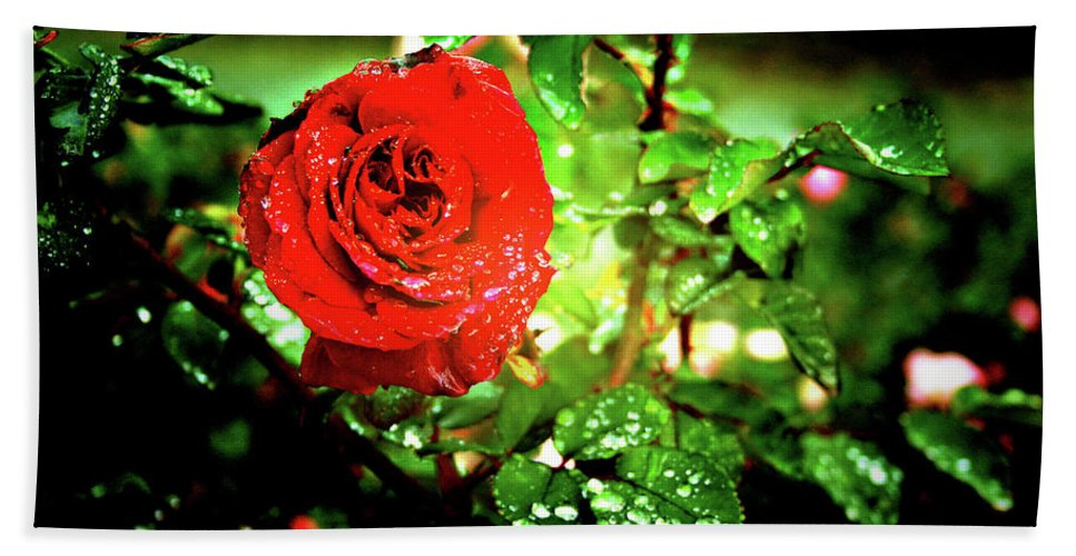 Rose Beach Towel featuring the photograph Scarlet Raindrops by Douglas Barnard