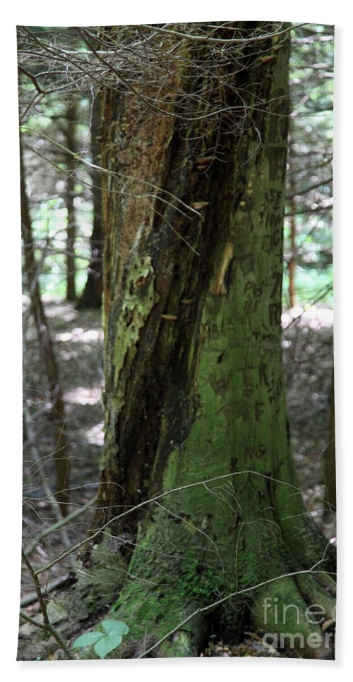 Tree Beach Towel featuring the photograph Scarred by Amanda Barcon