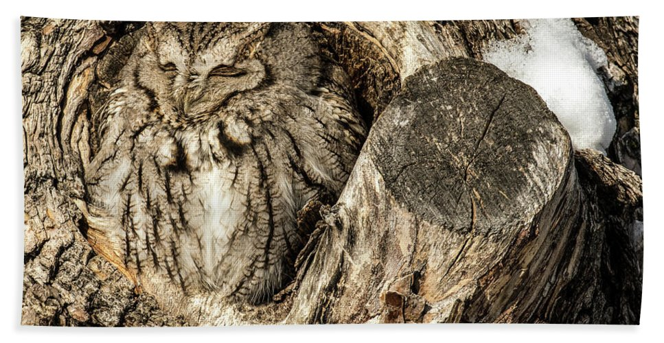 Animal Beach Towel featuring the photograph Screech Owl In Cavity Nest by Dawn Key