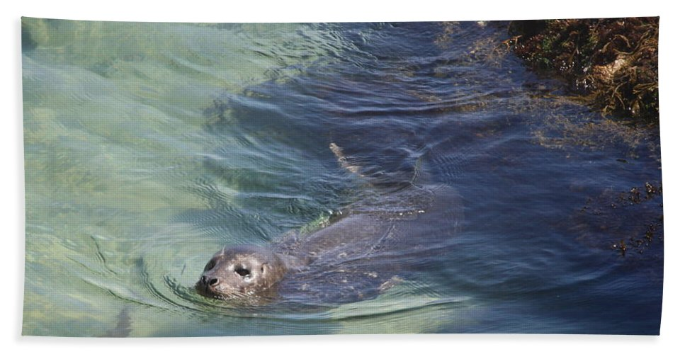 Sea Lion Beach Towel featuring the photograph Sea Lion In Clear Blue Waters by Carol Groenen