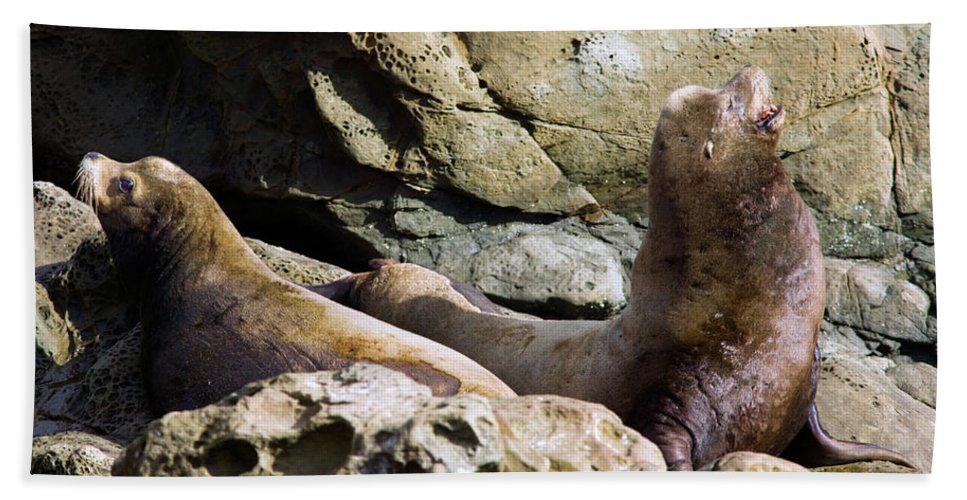 Animal Beach Towel featuring the photograph Sea Lions by Randall Ingalls