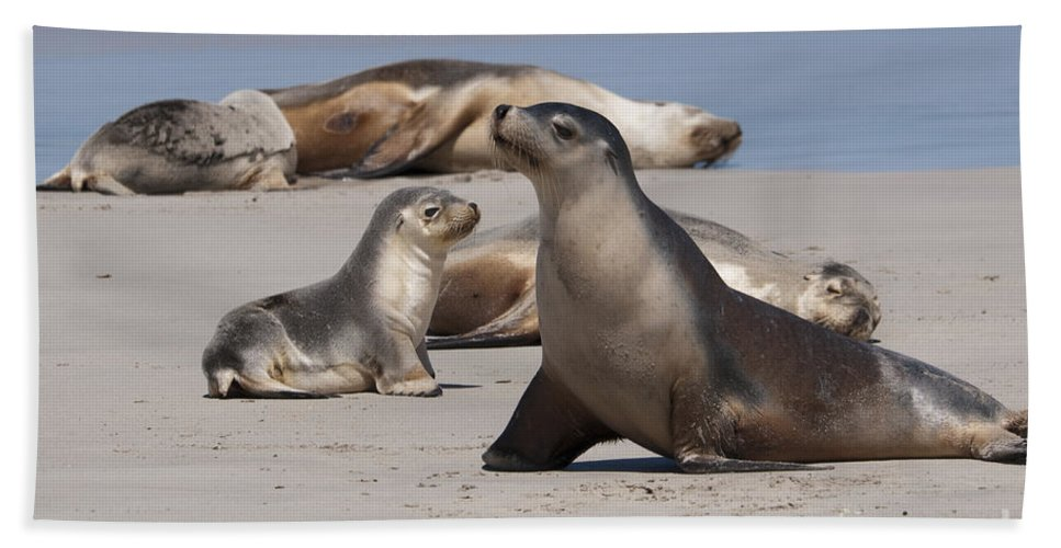 Sea Lion Beach Towel featuring the photograph Sea Lions by Werner Padarin