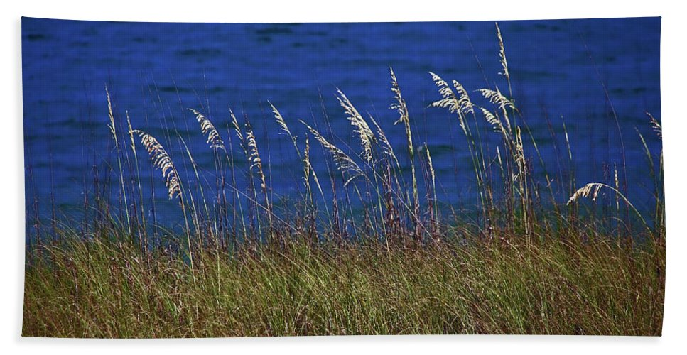 Water Beach Towel featuring the photograph Sea Oats by David Campbell