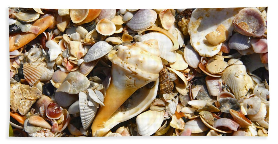 Florida Beach Sheet featuring the photograph Sea Shells by David Lee Thompson