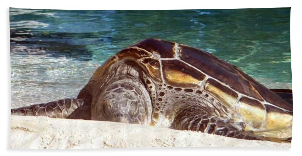 Sea Turtle Beach Towel featuring the photograph Sea Turtle Resting by Amanda Eberly-Kudamik