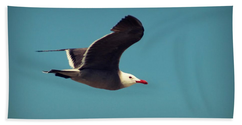 Bird Beach Towel featuring the photograph Seagull Aflight by Charles Benavidez