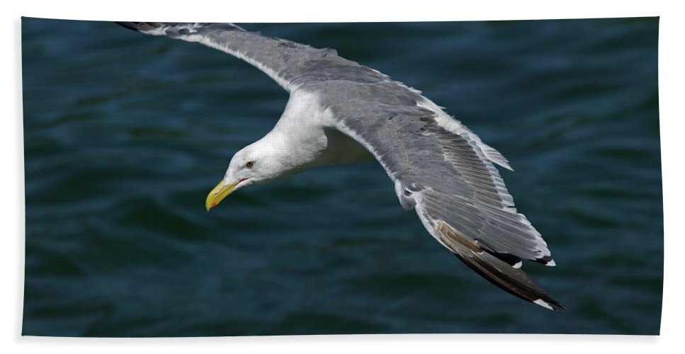 Animal Beach Towel featuring the photograph Seagull In Flight by Randall Ingalls