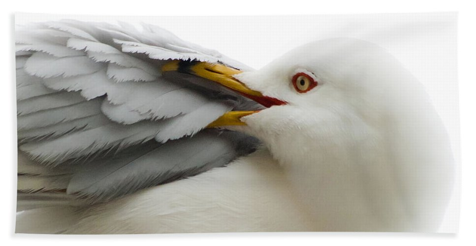 Seagull Beach Towel featuring the photograph Seagull Pruning His Feathers by Keith Allen