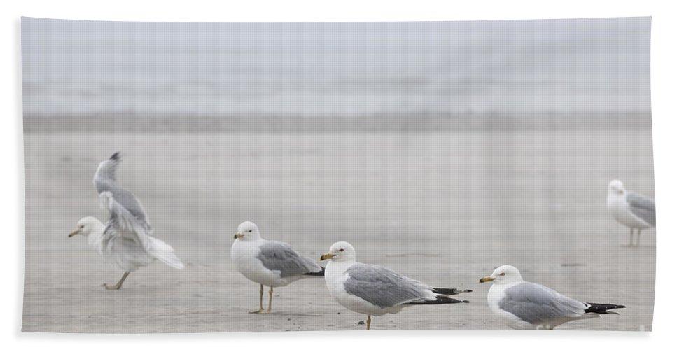 Seagulls Beach Towel featuring the photograph Seagulls On Foggy Beach by Elena Elisseeva