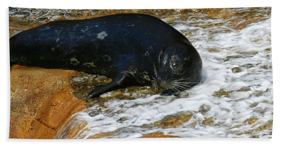 Seal Beach Towel featuring the photograph Seal by Anthony Jones