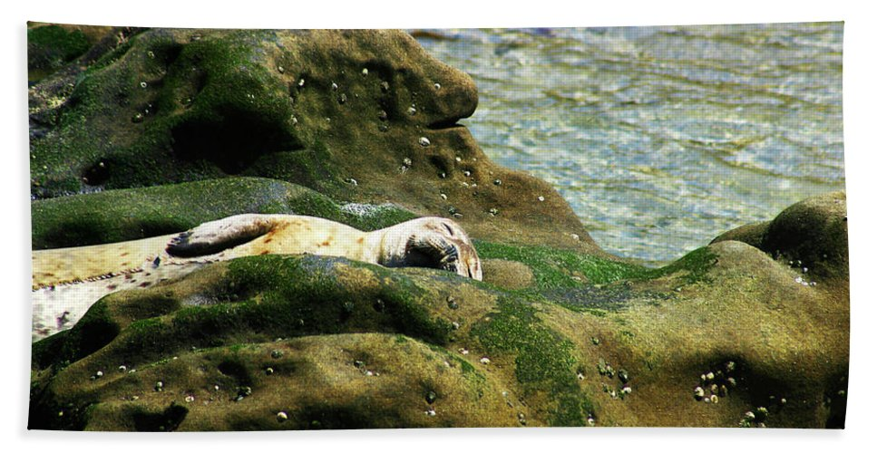 Seal Beach Towel featuring the photograph Seal On The Rocks by Anthony Jones