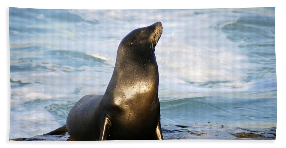 Sealion Beach Towel featuring the photograph Sealion by Anthony Jones