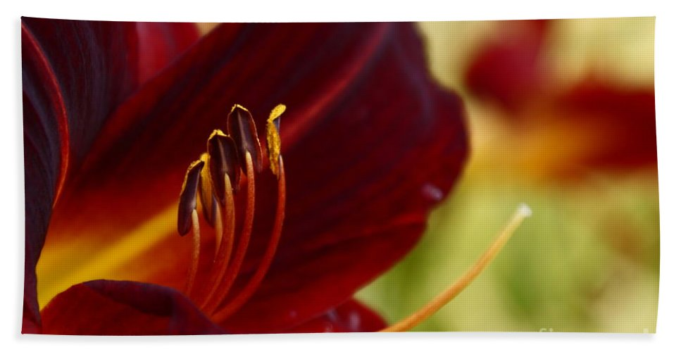 Seductive Lily Beach Towel featuring the photograph Seduction After The Rain by Joanne Smoley