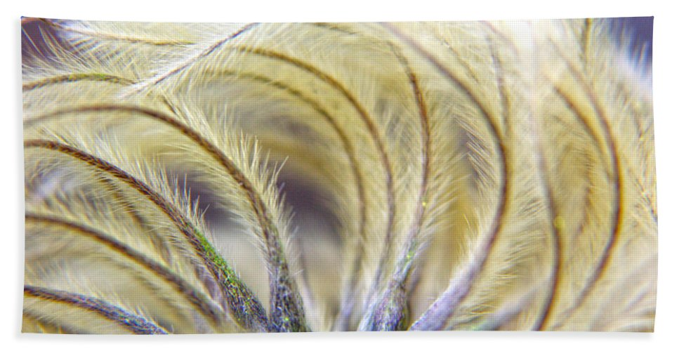 Abstract Wall Art.abstract Canvas Print Beach Towel featuring the photograph Seedheads by Brian Roscorla