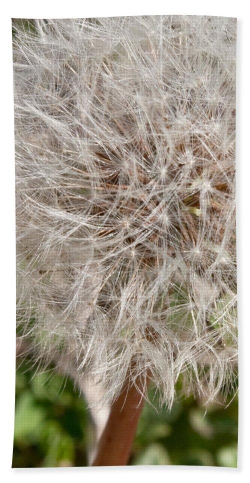 Flower Beach Towel featuring the photograph Seedlings by Hannah Breidenbach