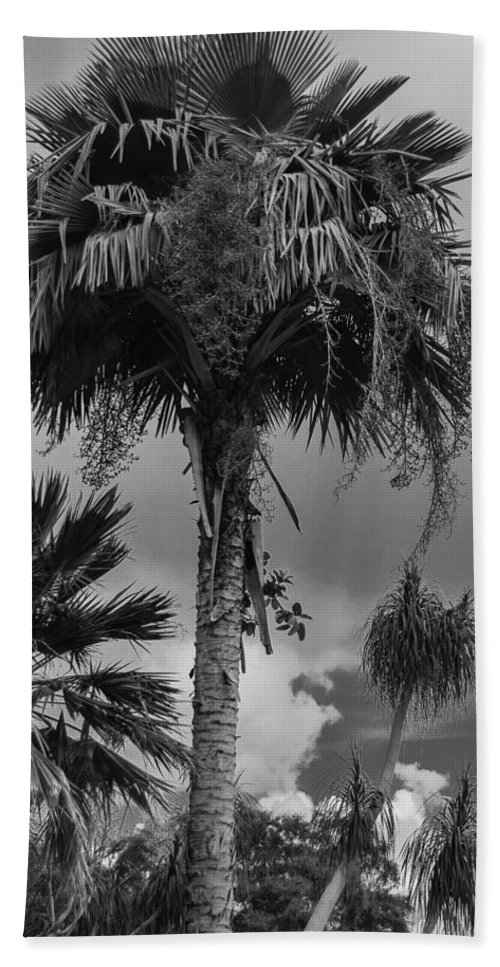 Beach Towel featuring the photograph Selby Garden Palms by Susan Molnar