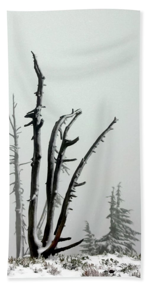 Snags Beach Towel featuring the photograph September Snow by Albert Seger