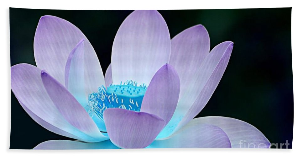 Flower Beach Towel featuring the photograph Serene by Jacky Gerritsen