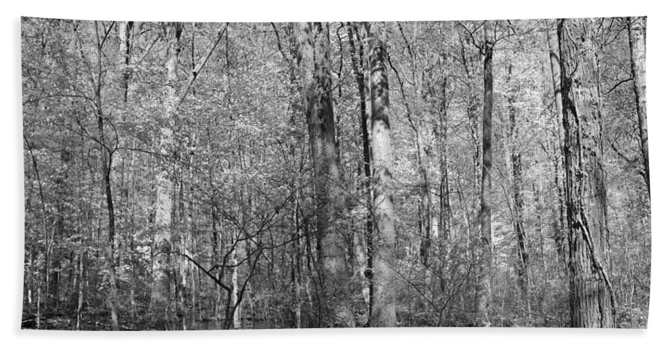Six Mile Cypress Slough Beach Towel featuring the photograph Seven Days Of Sunday by Michiale Schneider