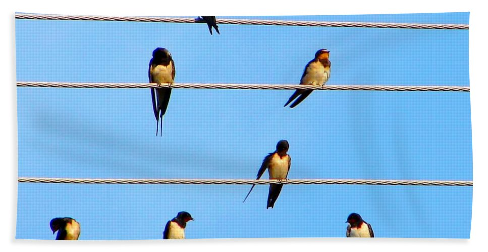 Swallow Beach Towel featuring the photograph Seven Swallows by Ana Maria Edulescu