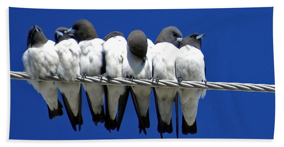 Animals Beach Sheet featuring the photograph Seven Swallows Sitting by Holly Kempe