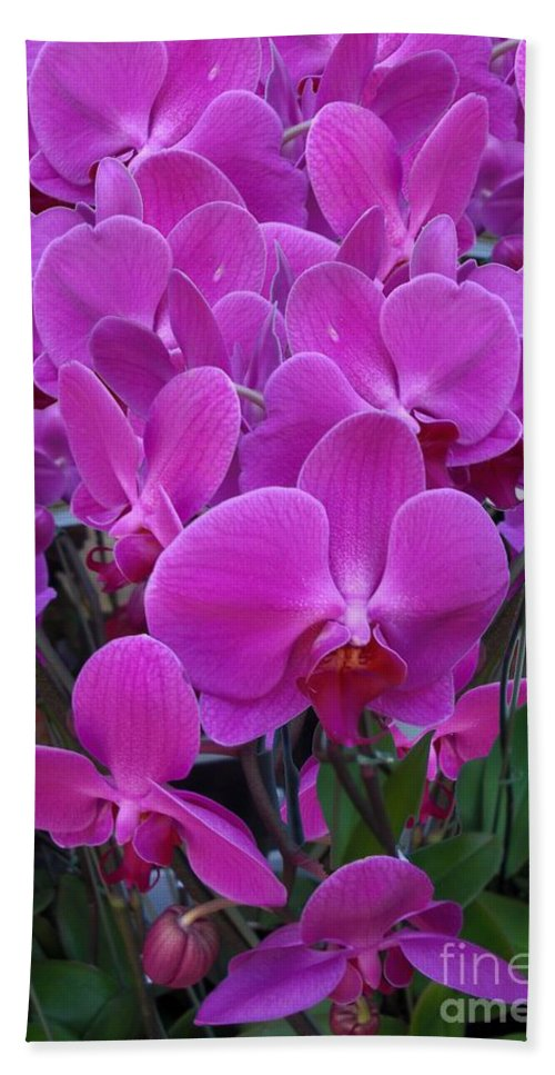 Beach Towel featuring the digital art Sf Pink Flowers by Ron Bissett