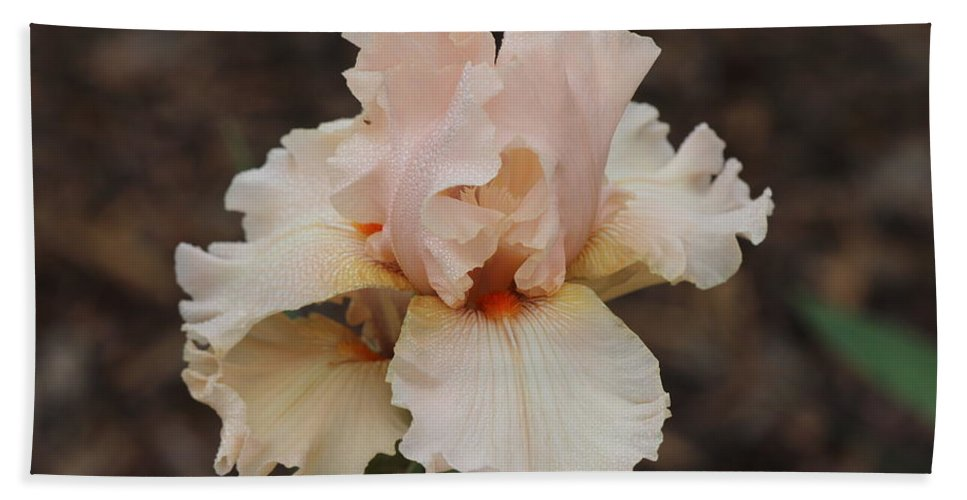 Iris Beach Towel featuring the photograph Shades Of Pink by James Smullins