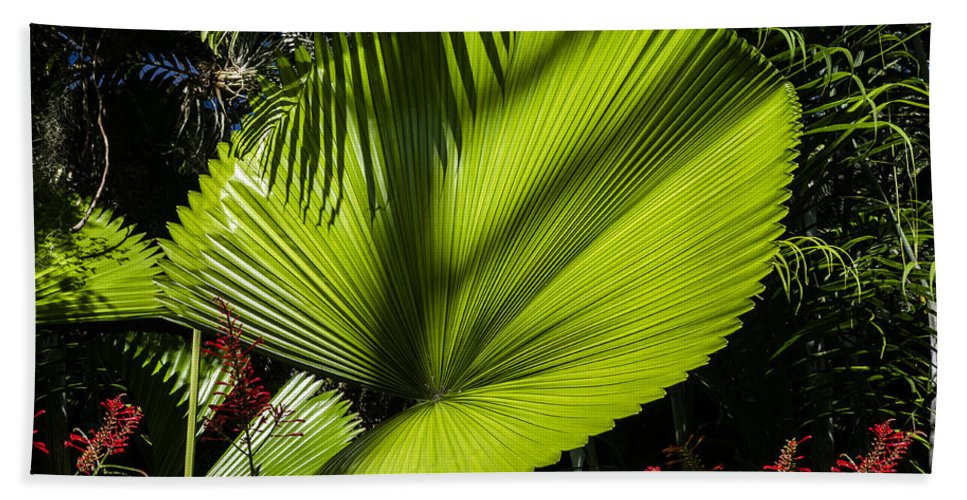 Licuala Grandis Beach Towel featuring the photograph Shadow On A Ruffled Fan Palm by Kenneth Lempert