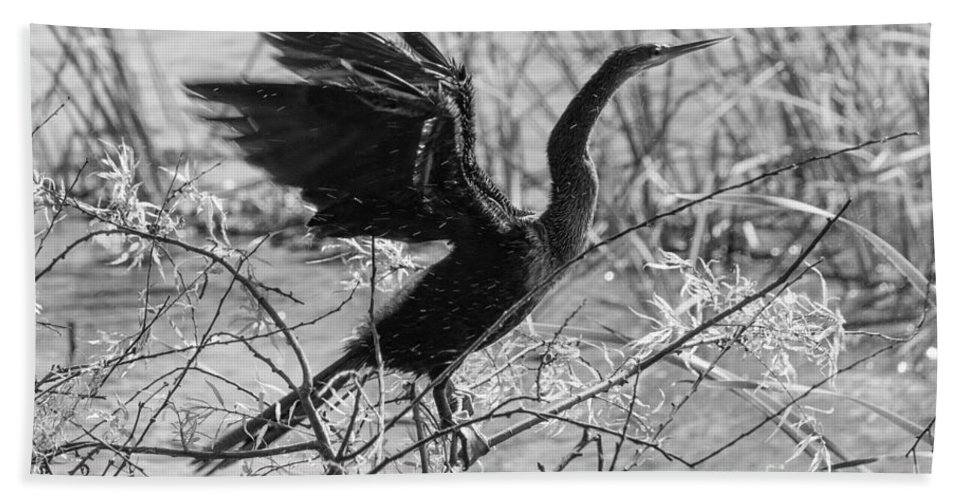 Circle B Bar Reserve Beach Towel featuring the photograph Shaking Off Water, Black And White by Liesl Walsh
