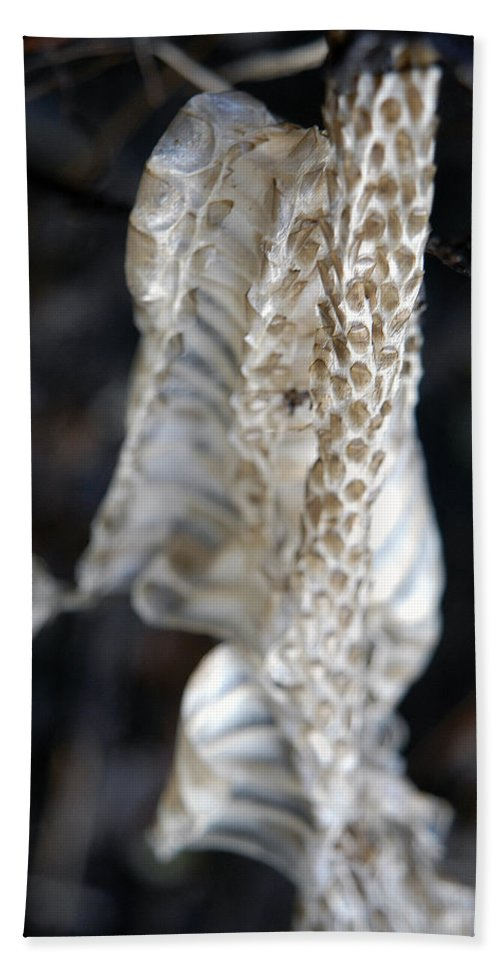 Snake Beach Towel featuring the photograph Shed - Snake Skin by D'Arcy Evans