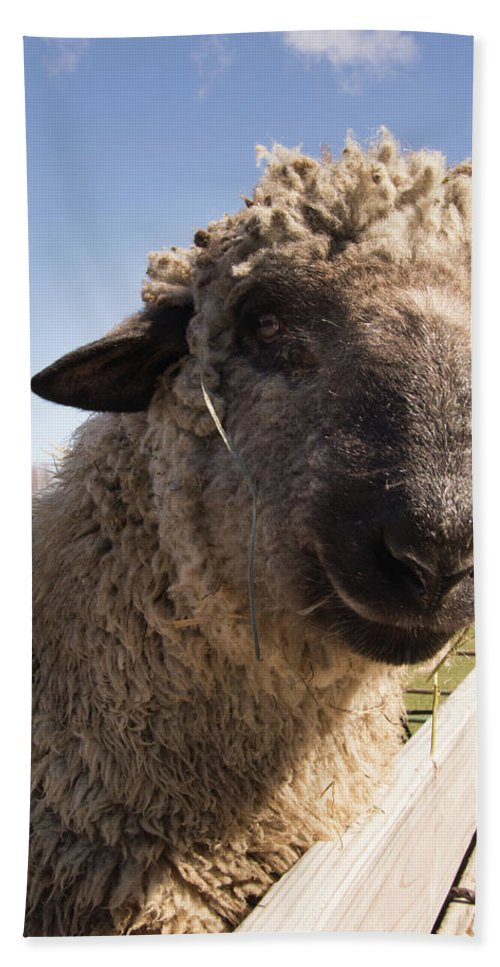 Sheep Beach Towel featuring the photograph Sheep Face 2 by Diane Schuler