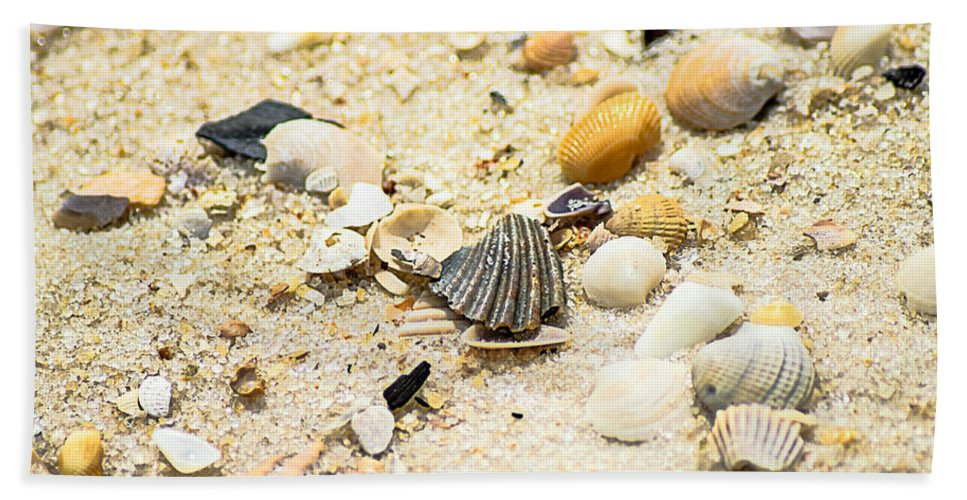 Shells Beach Towel featuring the photograph Shells by Brandon Stansbury