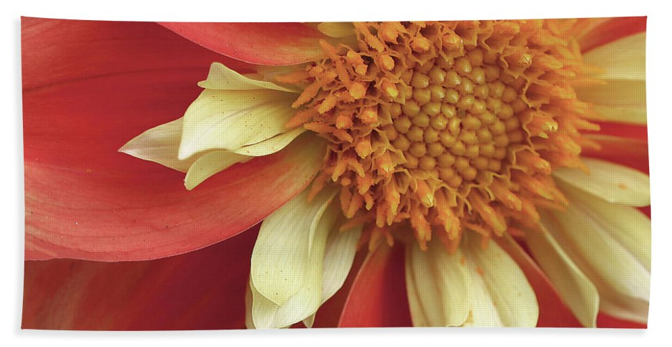 Dahlia Beach Towel featuring the photograph Shift In Perception by Vanessa Thomas