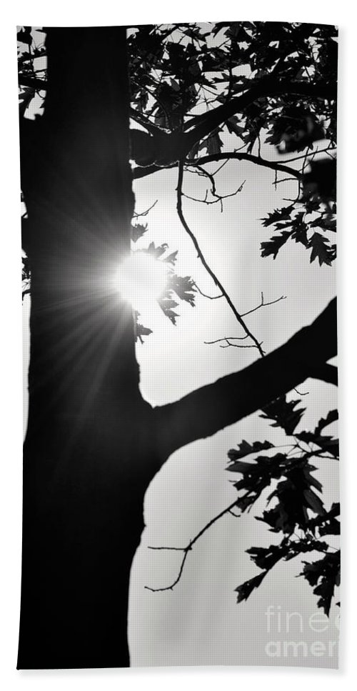 Black And White Beach Towel featuring the photograph Shine Through by Traci Cottingham
