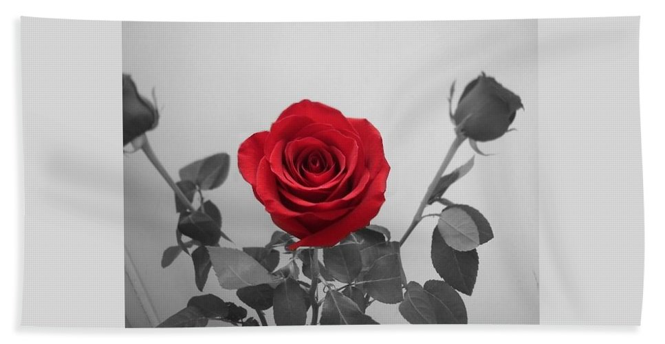 Roses Photography Beach Towel featuring the photograph Shining Red Rose by Georgeta Blanaru